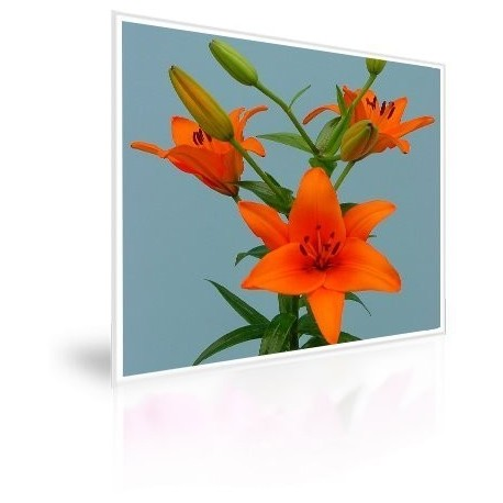 Caja 300 Bulbos De Lilium Naranjo