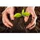 Tierra Enmienda Orgánica 25 Kg