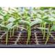 PRO-MAX Sustratos para semilleros 20 Litros