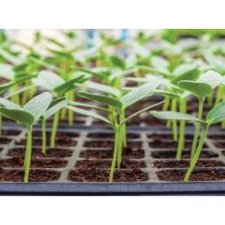 Plantines o Almacigos Surtidos 105 Unidades